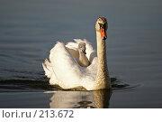 Катание на маме. Стоковое фото, фотограф Андрей Явнашан / Фотобанк Лори