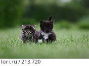 Рождённые свободными. Стоковое фото, фотограф Андрей Явнашан / Фотобанк Лори