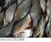 Купить «Рыба», фото № 213956, снято 2 февраля 2008 г. (c) Dmitriy Andrushchenko / Фотобанк Лори