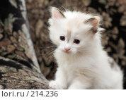 Купить «Любопытный котенок на пестром фоне», фото № 214236, снято 1 марта 2008 г. (c) Ирина Игумнова / Фотобанк Лори