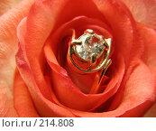 Купить «Роза с золотыми драгоценностями», фото № 214808, снято 19 сентября 2019 г. (c) ElenArt / Фотобанк Лори
