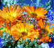 Яркие цветы, фото № 214816, снято 21 июля 2017 г. (c) ElenArt / Фотобанк Лори