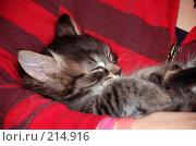 Купить «Котенок спит на руках хозяйки», фото № 214916, снято 23 ноября 2007 г. (c) Golden_Tulip / Фотобанк Лори