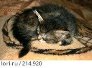 Купить «Котенок спит, свернувшись клубочком», фото № 214920, снято 24 ноября 2007 г. (c) Golden_Tulip / Фотобанк Лори