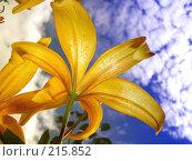 Небесный цветок. Стоковое фото, фотограф Павел Филатов / Фотобанк Лори