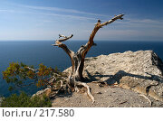 Купить «Сухая коряга на скале. Вид на море и горизонт», фото № 217580, снято 19 сентября 2006 г. (c) Олег Титов / Фотобанк Лори