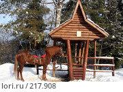 Купить «Коричневая лошадь, привязанная к колодцу», фото № 217908, снято 3 февраля 2008 г. (c) Карасева Екатерина Олеговна / Фотобанк Лори