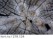 Купить «Текстура старой древесины», фото № 218124, снято 20 февраля 2020 г. (c) ElenArt / Фотобанк Лори