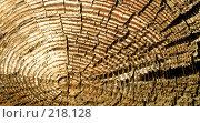 Купить «Древесная текстура», фото № 218128, снято 20 февраля 2020 г. (c) ElenArt / Фотобанк Лори