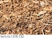 Купить «Текстура древесины», фото № 218132, снято 29 января 2020 г. (c) ElenArt / Фотобанк Лори
