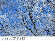 Зима. Стоковое фото, фотограф ElenArt / Фотобанк Лори