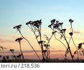Купить «Закат в поле», фото № 218536, снято 21 января 2018 г. (c) ElenArt / Фотобанк Лори