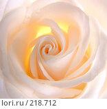 Купить «Красивая роза», фото № 218712, снято 24 июня 2019 г. (c) ElenArt / Фотобанк Лори