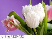 Купить «Тюльпаны», фото № 220432, снято 5 марта 2008 г. (c) Лифанцева Елена / Фотобанк Лори