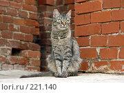 Купить «Кот», фото № 221140, снято 28 сентября 2007 г. (c) Синицын Андрей / Фотобанк Лори