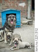 Купить «Мама и щенки», фото № 221512, снято 8 августа 2007 г. (c) Илья Лиманов / Фотобанк Лори