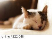 Купить «Спящий домашний кот», фото № 222048, снято 12 марта 2008 г. (c) Евгений Захаров / Фотобанк Лори