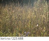 Купить «Полевые травы в лучах восходящего солнца», фото № 223688, снято 17 февраля 2019 г. (c) Ольга Хорькова / Фотобанк Лори