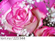 Купить «Розовая роза», фото № 223944, снято 15 марта 2008 г. (c) Боев Дмитрий / Фотобанк Лори