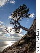 Купить «Сосна на склоне горы, с видом на море и солнце в кадре», фото № 224228, снято 17 августа 2018 г. (c) Олег Титов / Фотобанк Лори