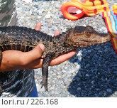Купить «Крокодил на ладошке», фото № 226168, снято 17 августа 2007 г. (c) vitamin13 / Фотобанк Лори