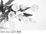 Купить «Букет белых тюльпанов в вазе, черно-белый вариант», фото № 227488, снято 8 марта 2008 г. (c) Ольга Хорькова / Фотобанк Лори