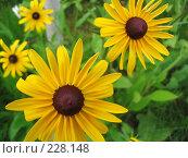 Желтые цветы, фото № 228148, снято 17 июля 2005 г. (c) Андрей Зык / Фотобанк Лори