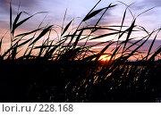 Закат солнца, фото № 228168, снято 18 октября 2017 г. (c) Андрей Зык / Фотобанк Лори