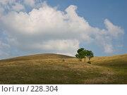 Купить «Холмистый пейзаж. Поле и облачное небо. Идеальная заставка», фото № 228304, снято 19 августа 2007 г. (c) Harry / Фотобанк Лори