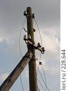 Купить «Заброшенный деревянный столб с обрывками электрических проводов», фото № 228644, снято 19 августа 2007 г. (c) Harry / Фотобанк Лори