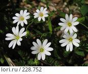 Купить «Белые цветы», фото № 228752, снято 14 мая 2007 г. (c) Илья Троицкий / Фотобанк Лори
