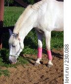 Купить «Белая лошадь», фото № 230088, снято 14 июня 2006 г. (c) Карасева Екатерина Олеговна / Фотобанк Лори