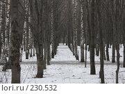Купить «Коридор из деревьев», фото № 230532, снято 19 января 2008 г. (c) Антон Перегрузкин / Фотобанк Лори
