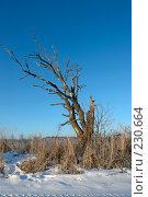 Купить «Дерево», фото № 230664, снято 5 января 2008 г. (c) Синицын Андрей / Фотобанк Лори