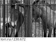 Купить «Зоопарк», фото № 230672, снято 20 марта 2008 г. (c) Синицын Андрей / Фотобанк Лори