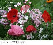 Купить «Цветы», фото № 233760, снято 1 июня 2020 г. (c) VPutnik / Фотобанк Лори