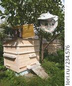 Купить «На пасеке», фото № 234576, снято 26 августа 2006 г. (c) Ирина Борсученко / Фотобанк Лори