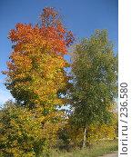 Купить «Очарование осени», фото № 236580, снято 23 сентября 2007 г. (c) Юлия Козинец / Фотобанк Лори