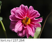 Купить «Мотылек на большом красном цветке», фото № 237264, снято 23 июля 2005 г. (c) Виктор Филиппович Погонцев / Фотобанк Лори