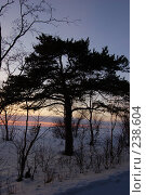 Купить «Одинокое дерево», фото № 238604, снято 23 января 2019 г. (c) Шемякин Евгений / Фотобанк Лори