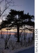 Одинокое дерево. Стоковое фото, фотограф Шемякин Евгений / Фотобанк Лори