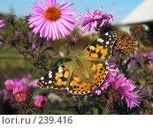 Купить «Живой цветок», фото № 239416, снято 29 сентября 2007 г. (c) ikheid / Фотобанк Лори