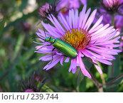 Купить «Изумрудный жук», фото № 239744, снято 30 января 2004 г. (c) ikheid / Фотобанк Лори