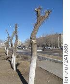 Купить «Обрезанные деревья», фото № 241680, снято 20 сентября 2018 г. (c) Геннадий Соловьев / Фотобанк Лори