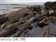 Купить «Побережье Белого моря, отлив», фото № 241780, снято 24 сентября 2007 г. (c) Андрюхина Анастасия / Фотобанк Лори