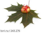 Купить «Золотое яйцо на кленовом листе», фото № 243276, снято 3 октября 2007 г. (c) Harry / Фотобанк Лори