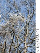 Купить «Весна, просыпаются деревья», фото № 243448, снято 4 апреля 2008 г. (c) Федор Королевский / Фотобанк Лори