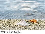 Купить «Две ракушки на морском берегу», фото № 243752, снято 16 марта 2008 г. (c) Татьяна Белова / Фотобанк Лори