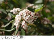 Купить «Калина», фото № 244304, снято 24 марта 2008 г. (c) Лифанцева Елена / Фотобанк Лори