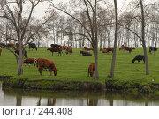 Купить «Стадо коров пасется на лугу за рекой. Республика Адыгея.», фото № 244408, снято 6 апреля 2006 г. (c) Виктор Филиппович Погонцев / Фотобанк Лори